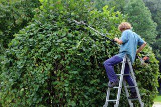 taille travaux de jardinage au Printemps