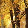 souffleur à feuilles
